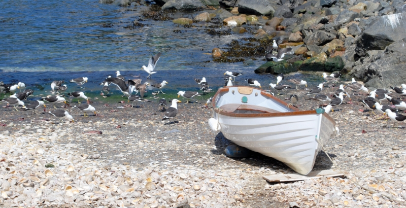 Seagulls And Boat