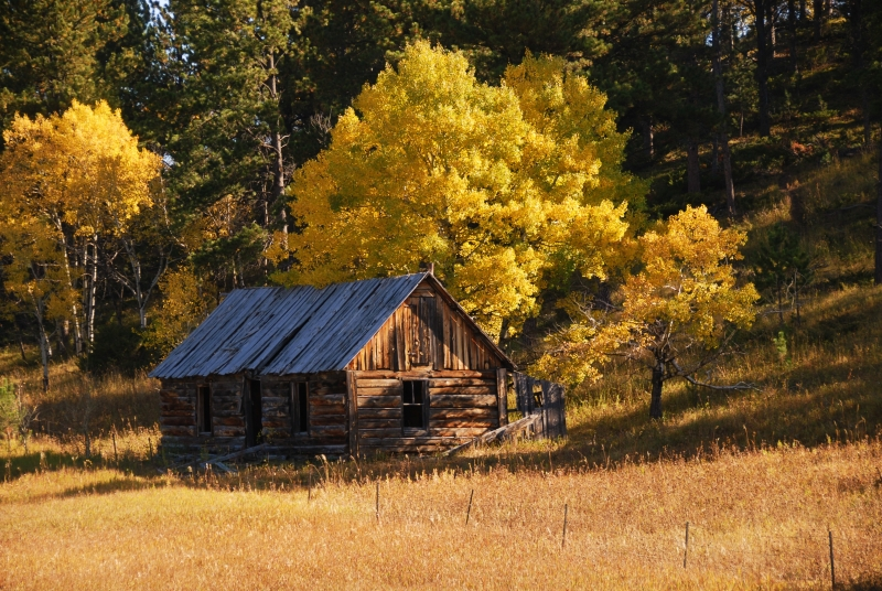 Cabin In The Black Hills
