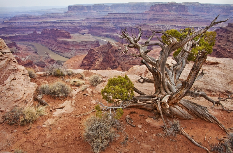 Dead Horse Point State Park View