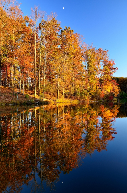 Fall Color Reflections
