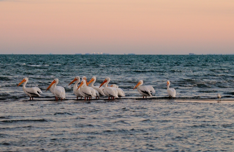 Sunset Over Pelicans