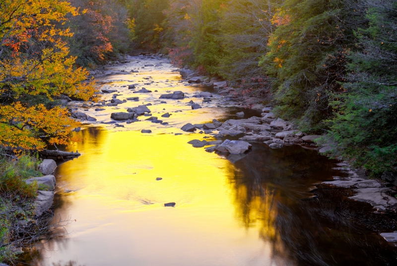 Golden Hour On The Blackwater River