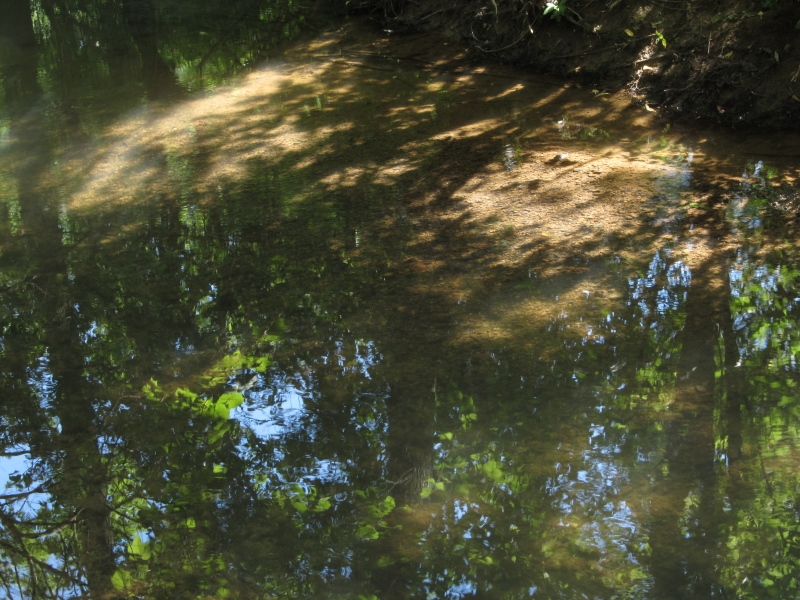 Tree Reflection In A Creek