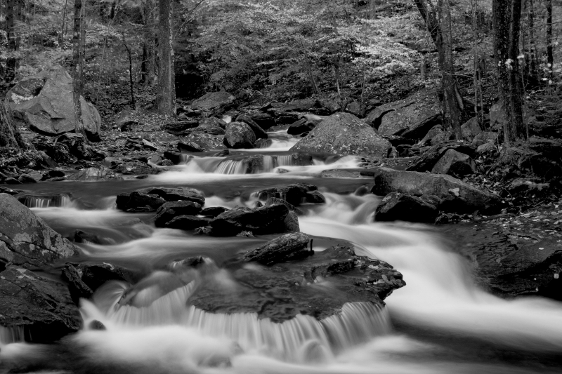Stream At Ricketts Glen State Park