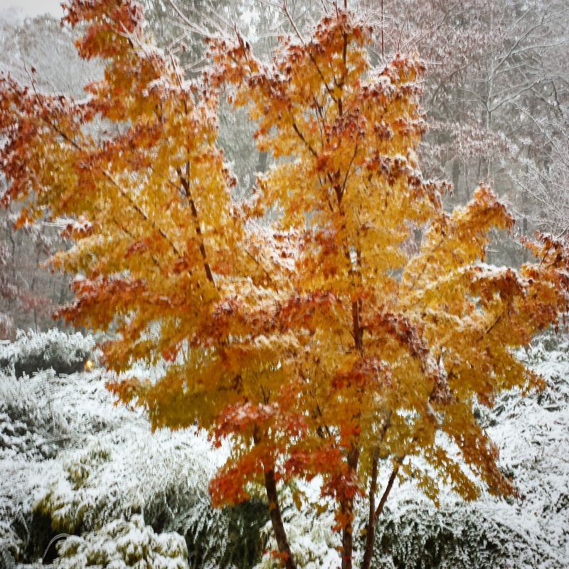 Early Snowstorm In The Cherokee National Forest