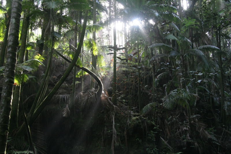 Rain Forest – Big Island Hawaii