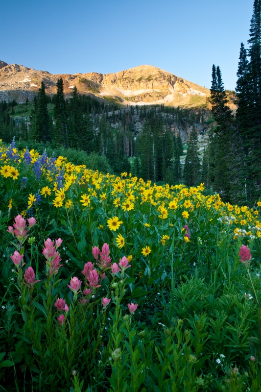 Wasatch Flowers