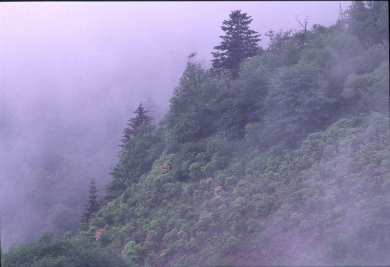 Foggy Smoky Mountains