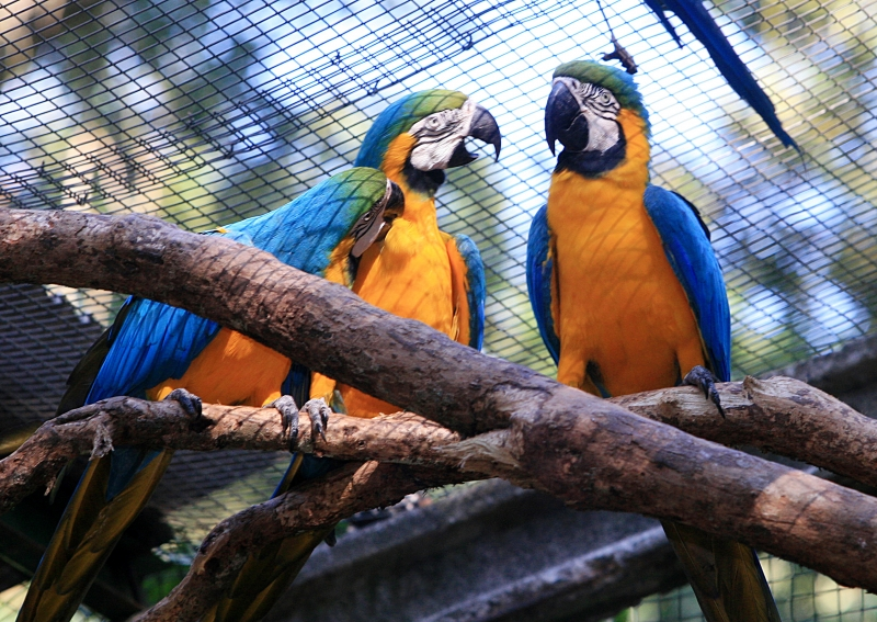 Bird's Park – Foz Do Iguaçu