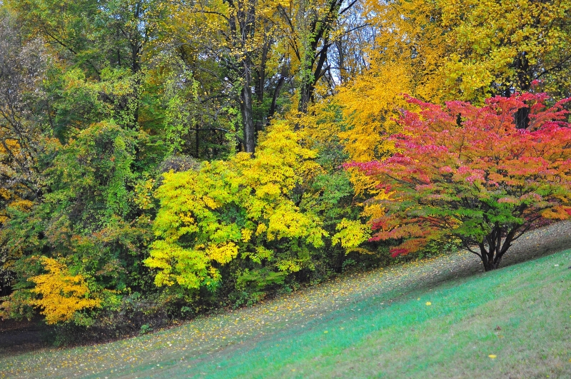 Valley Garden In Fall I