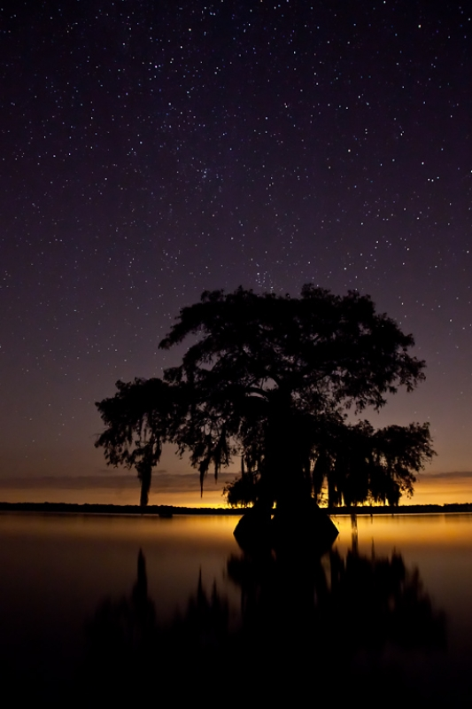 Night In The Louisiana Swamp