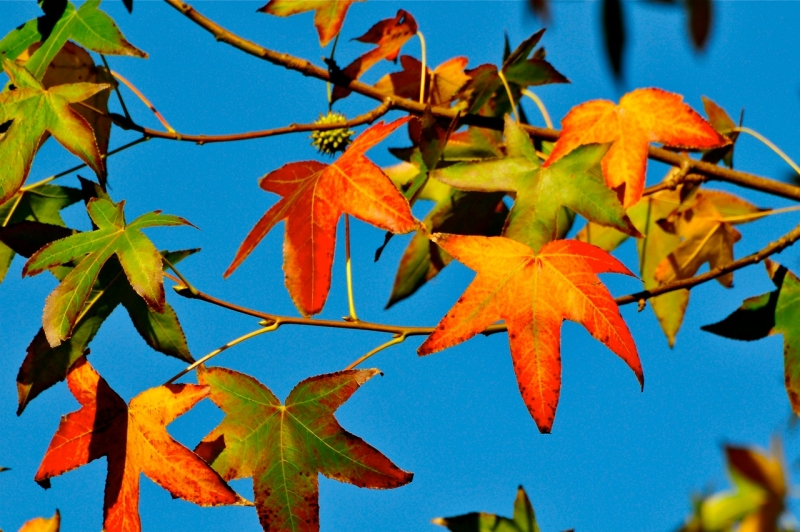 Red & Orange Leaves