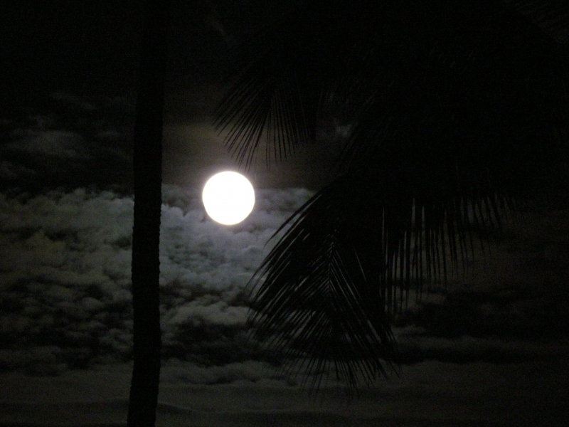 Moonlight Palm Trees