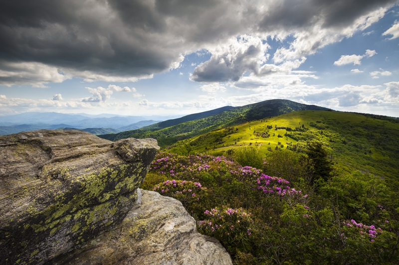 Roan Mountain Rhododendron Bloom – A Glorious Greeting