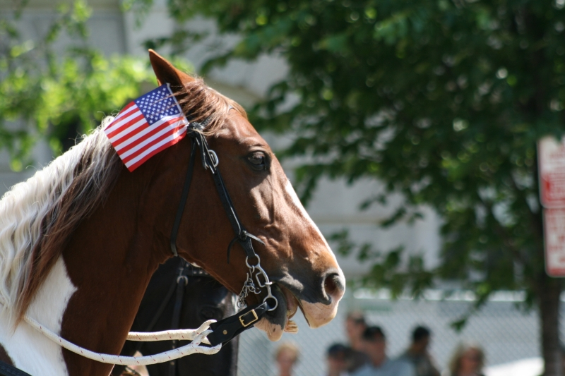 Patriotic Horse In Parade