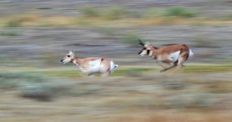Running Of The Doe