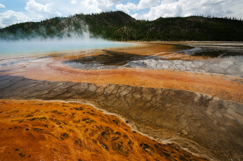 What Are Thermophilic Bacteria?