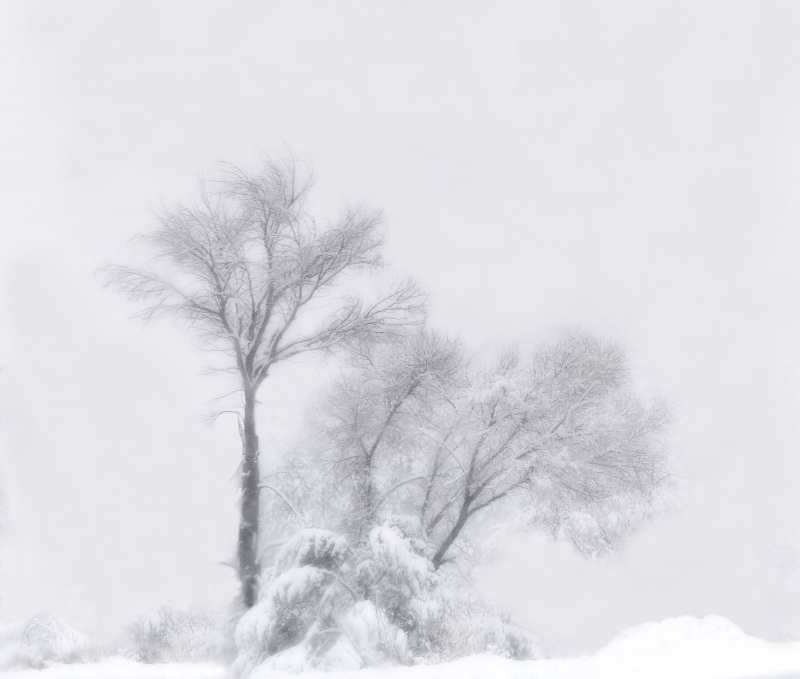 Of Fog And Snow
