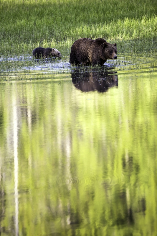 Aspen & Grizzly Reflection