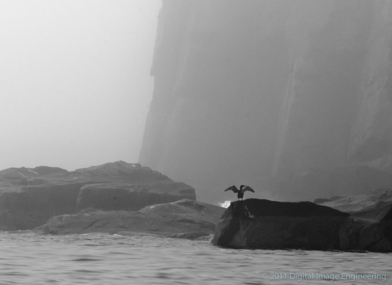 Cormorant At Otter Cliffs
