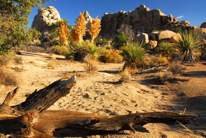 Mojave Desert In Joshua Tree National Park