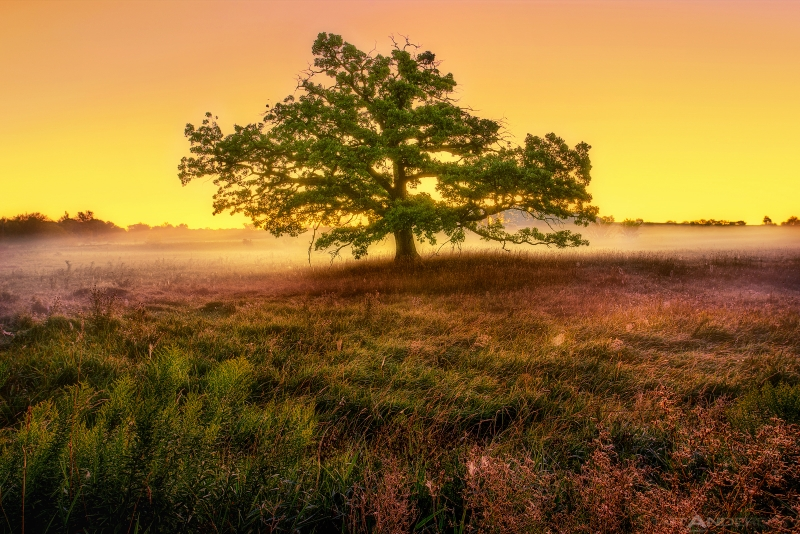 Prairie Tree At Sunrise