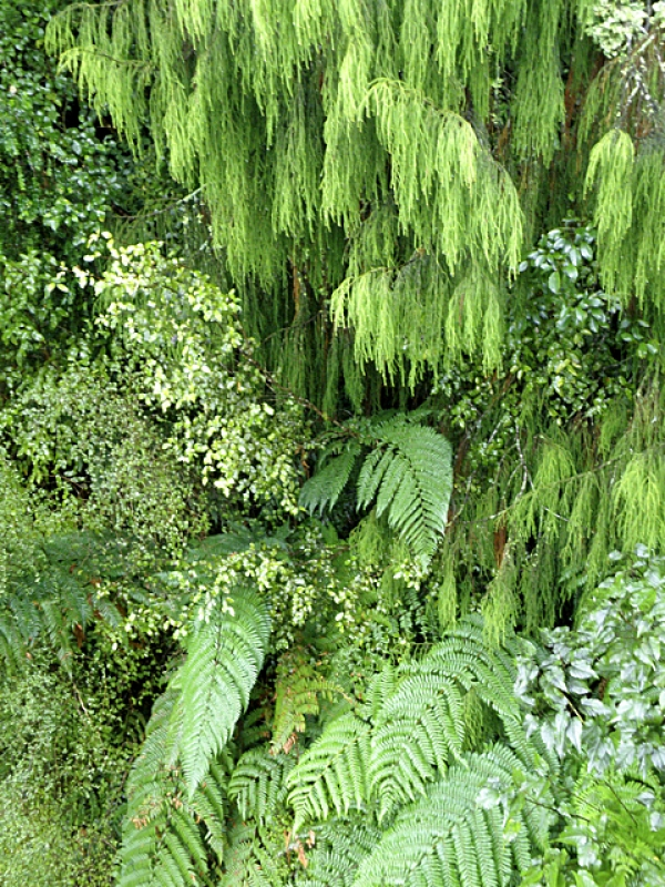 A Thousand Shades Of Green