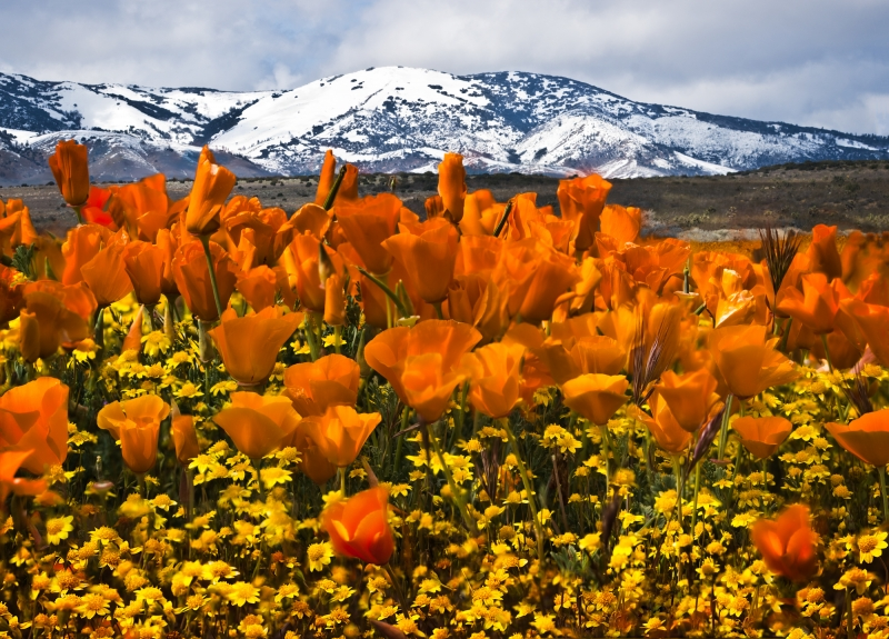 The World Of Poppies