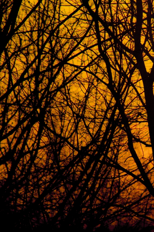 Winter Sunset Through The Trees