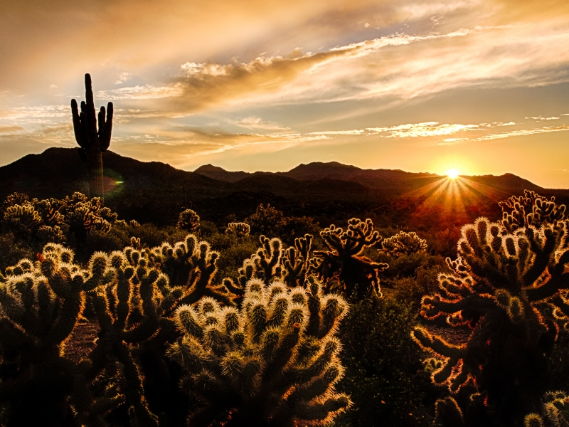 Cholla Sundown