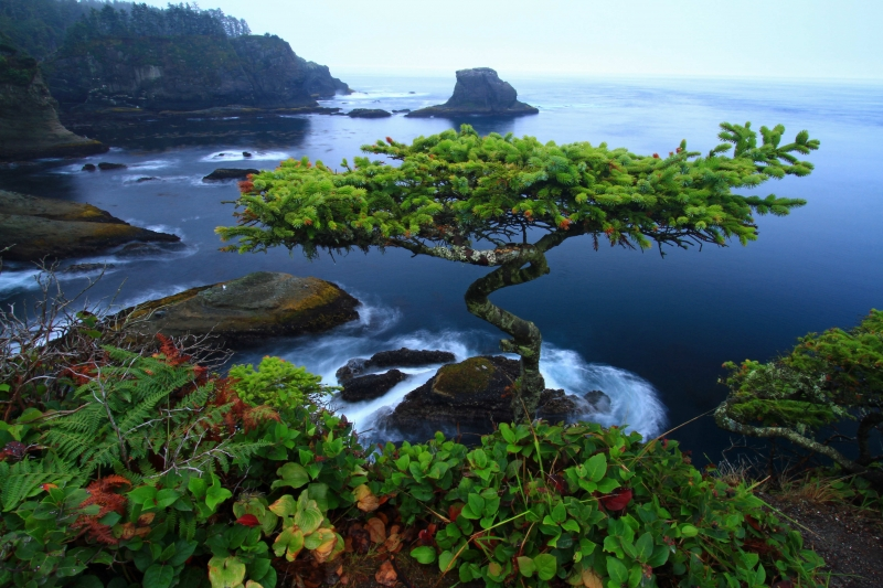 Cape Flattery Bonsai