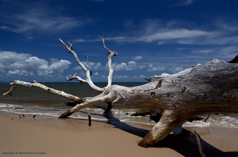 Driftwood On Red Beach, Bribie Island, Qld