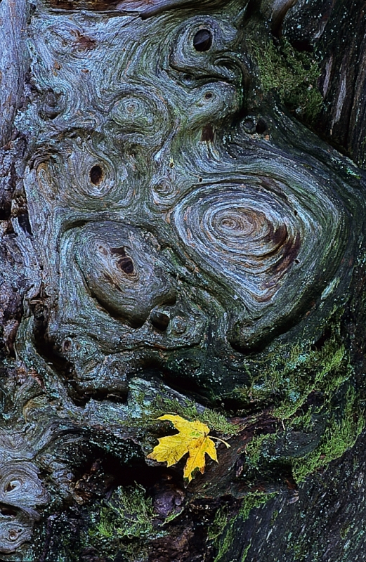 Autumn Leaf On Mossy Stump