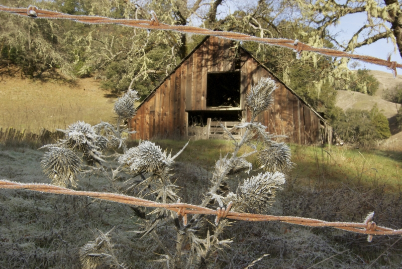 Frosty Barn/ Frozen Thistle