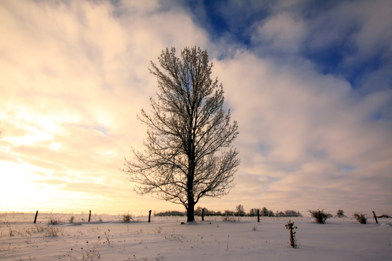 Tree, Sky, Winter