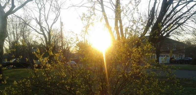 Sunrise Within First Sign Of Spring