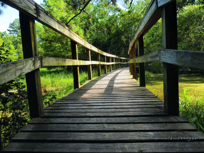 Walkway To The Marsh