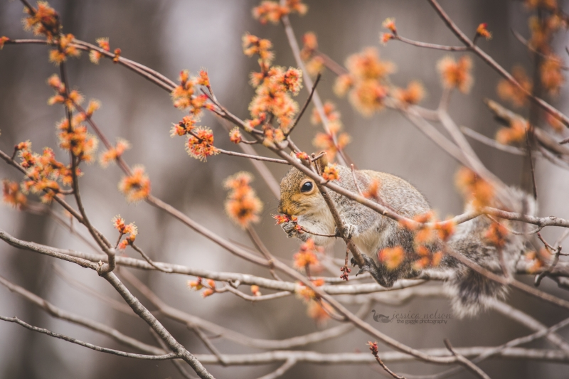 Spring Squirrel Munching
