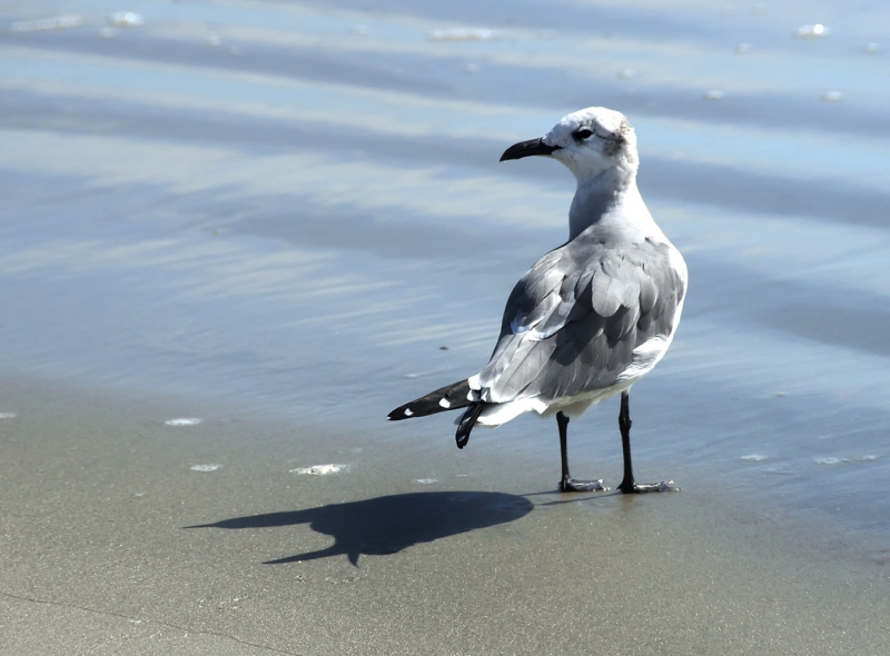 Seagull, Sand And Sea