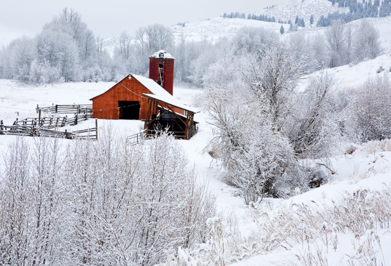 Red Barn In Winter