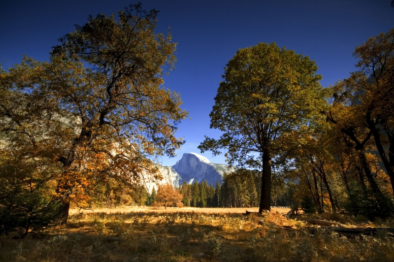 Autumn In Yosemite