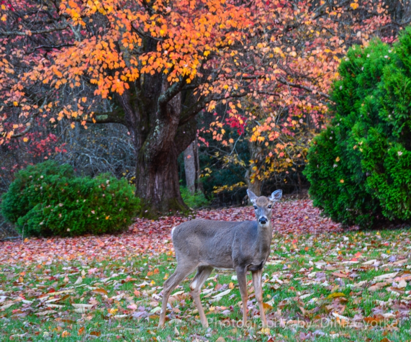 Deer In Autumn Beauty