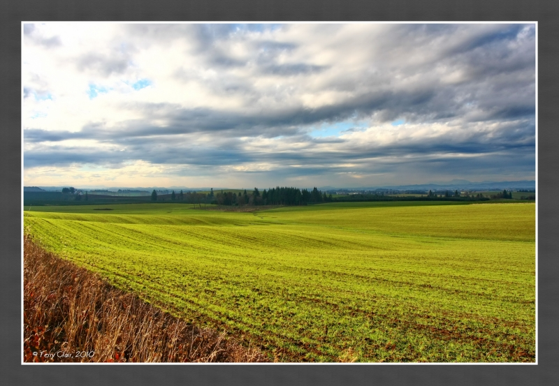 Oregon Fields
