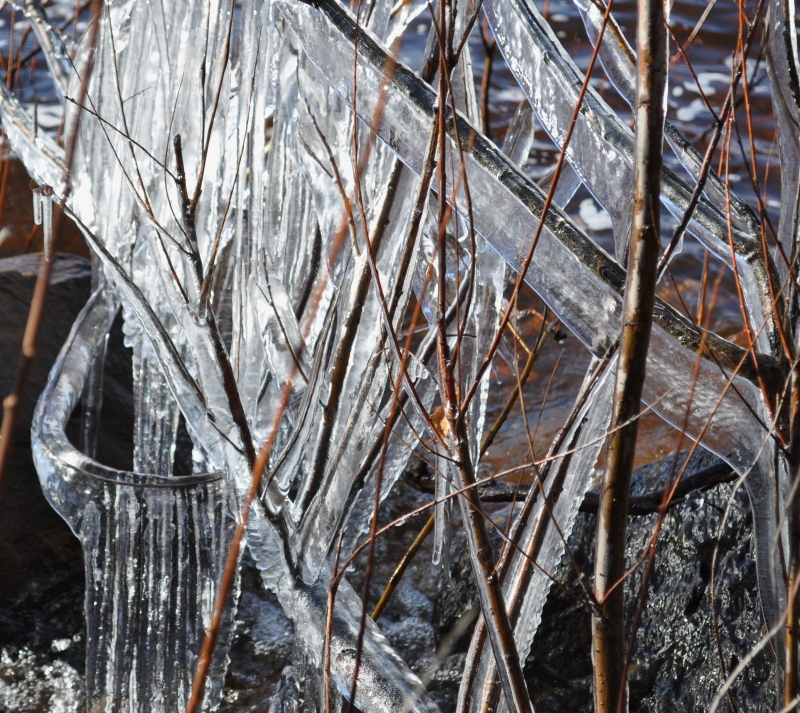 Iced Twigs