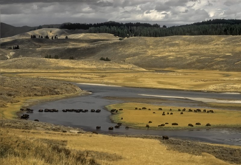 Quintessential Yellowstone National Park Sceneic