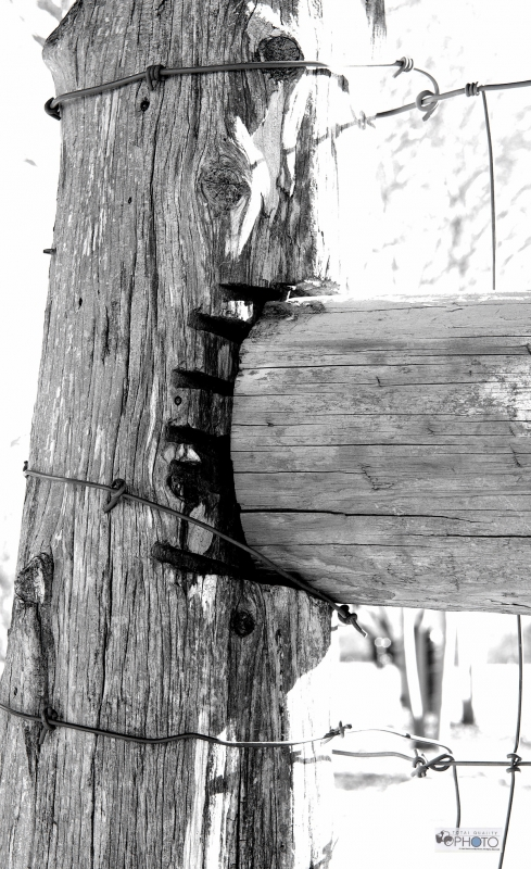 Old Texas Barbed Wire Wood Fence