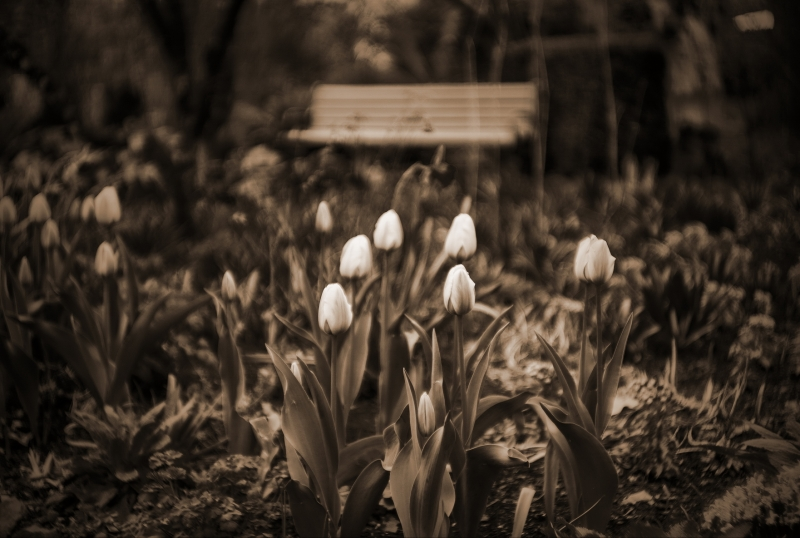 Spring Flowers And Park Bench