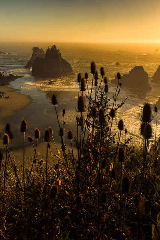 Sea Stacks On The Oregon Coast