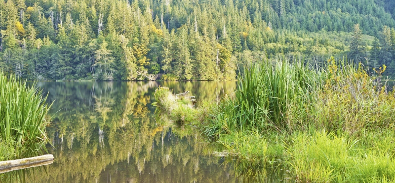 Beaver Lake On The Olympic Peninsula