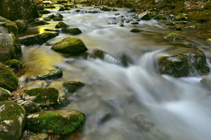 A Painted Stream